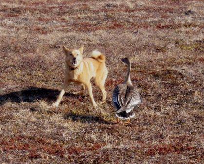 Юмор охота убийство способы охоты