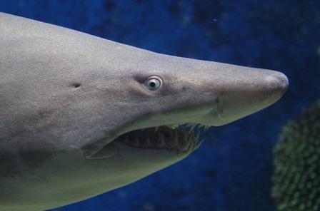 разрушители мифов эксперимент с акулой