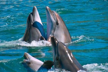 акулы мифы и реальность дельфины