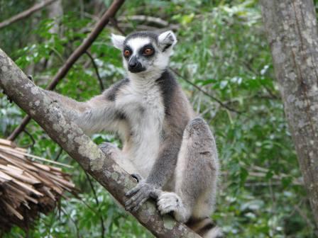 мадагаскар остров интересные факты фауна