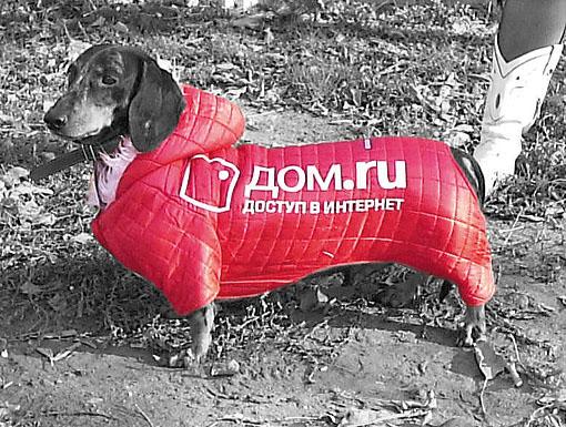 Логотипы на собаках